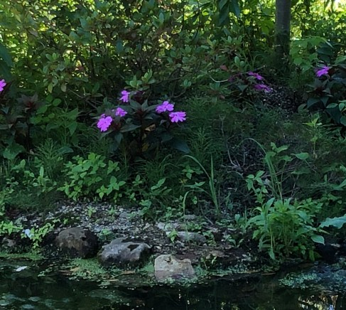 flowers by water