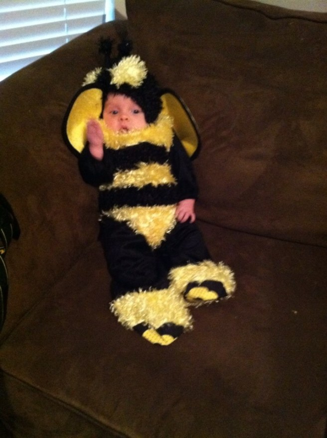 Bees Hollis