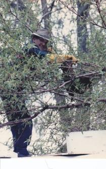 Bees Uncle Condie