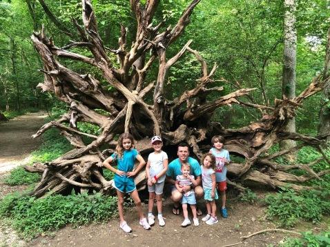 england journey tree roots