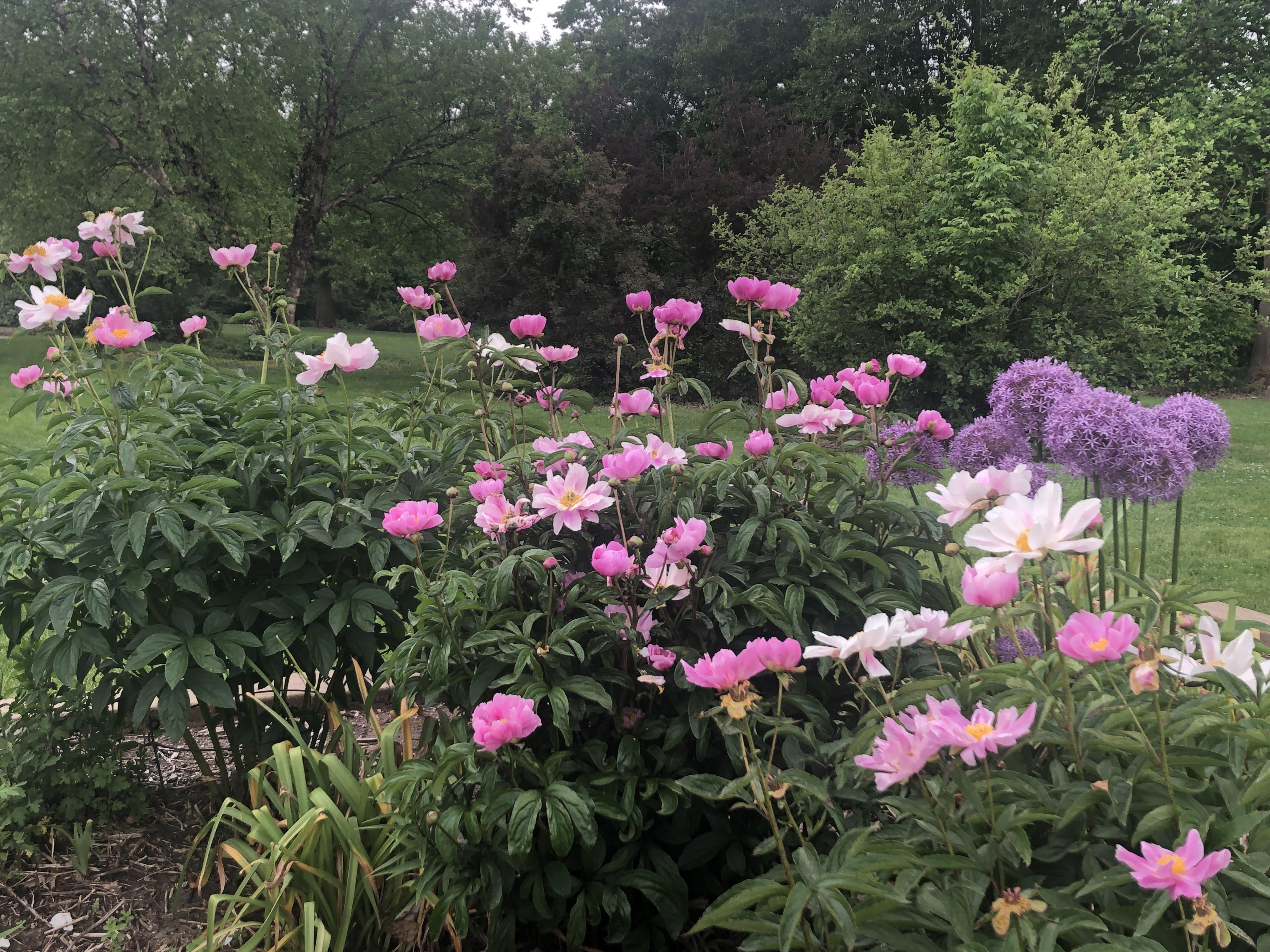 USE Wildflowers 1