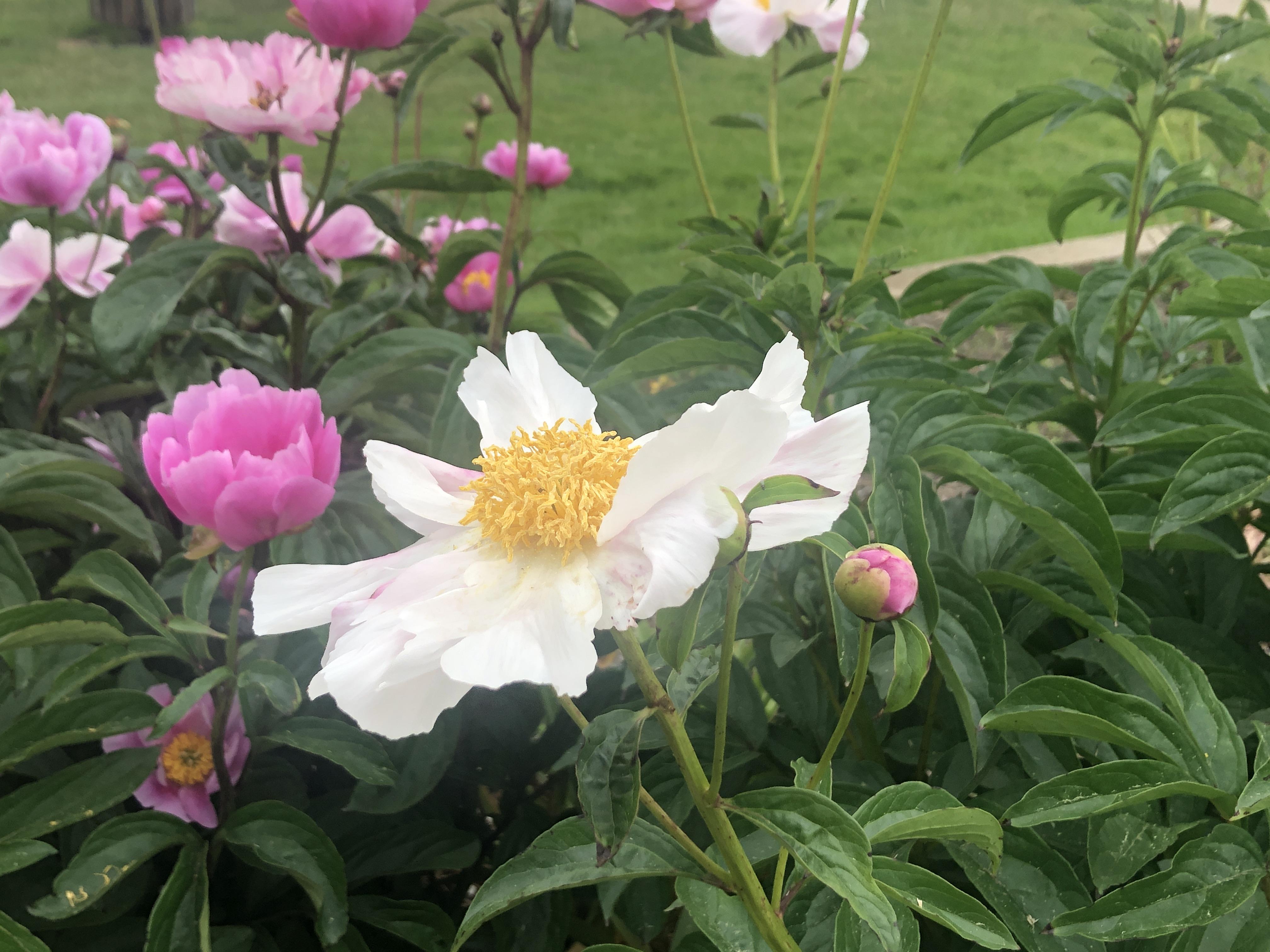 USE Wildflowers 2