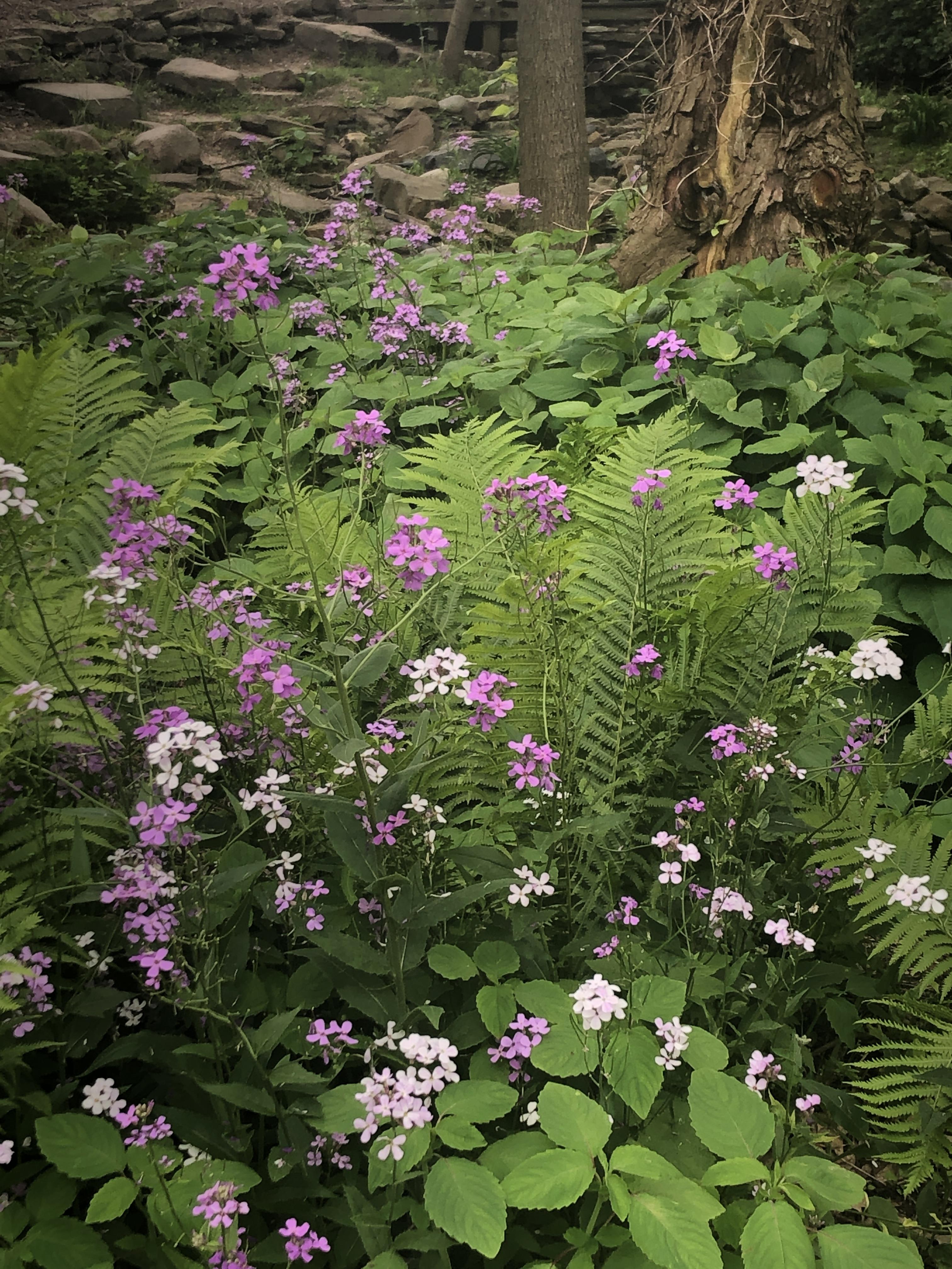 USE Wildflowers 4