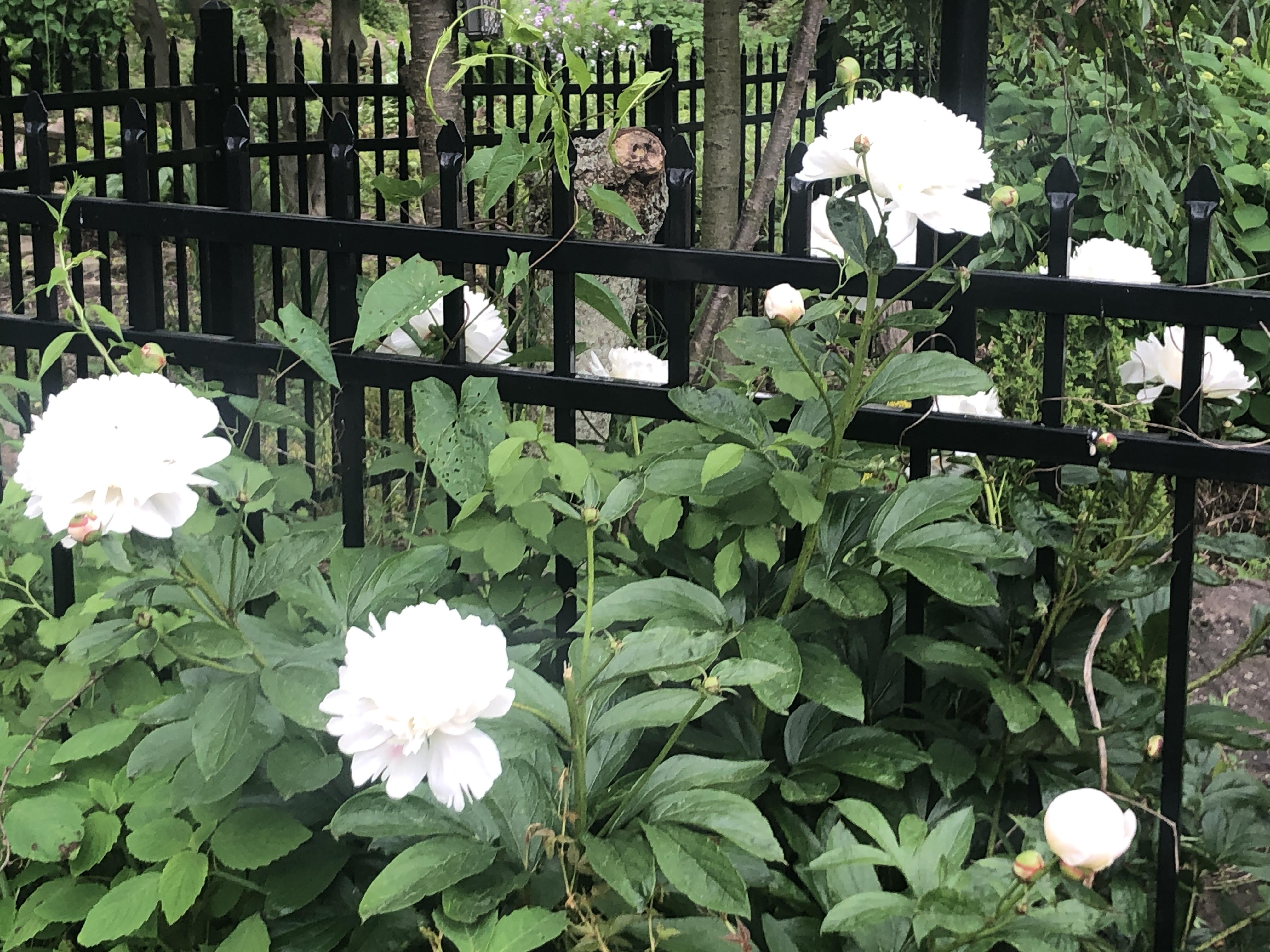 USE Wildflowers 5
