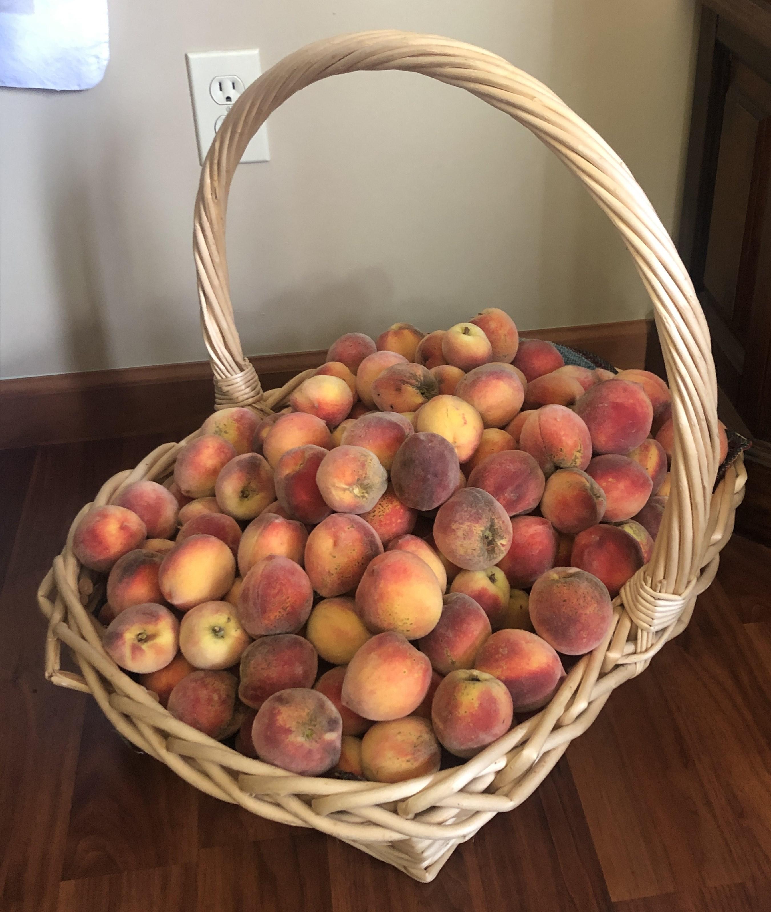 JOE MILITARY Fruit of your life