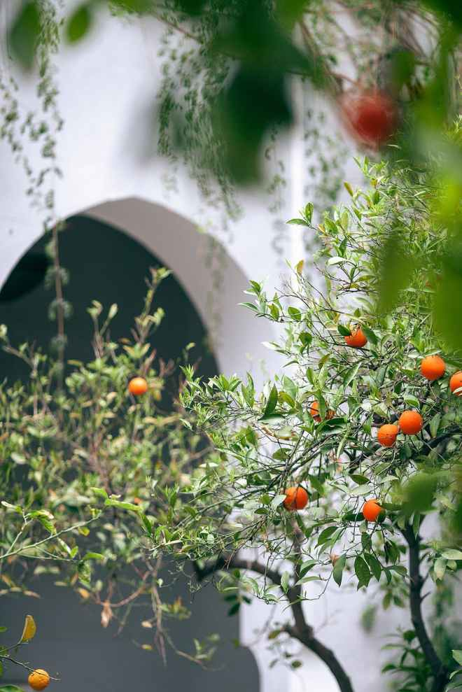 branches of tree with fruits